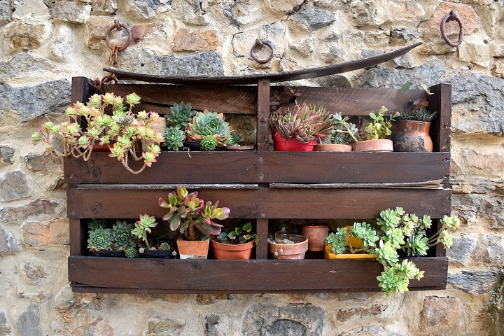 Types of Succulent Wall Planters