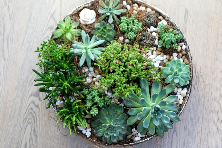 Types of Succulents You Can Put in a Wall Planter