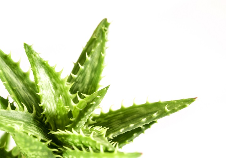 Do's and Don'ts With Spiky Succulents