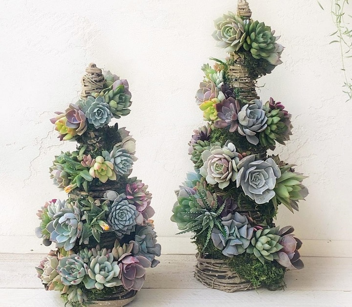 Do's and Don'ts With a Succulent Christmas Tree