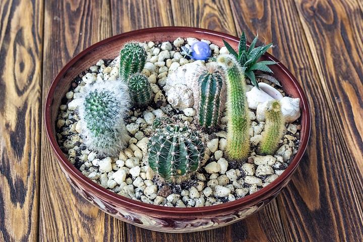 FAQ About Mini Succulents