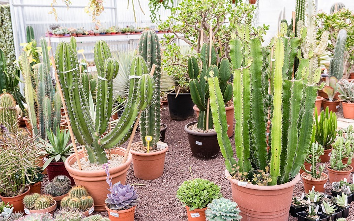 FAQ About Succulent Nurseries