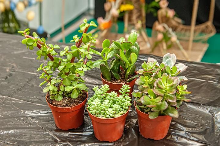 FAQ About Succulents