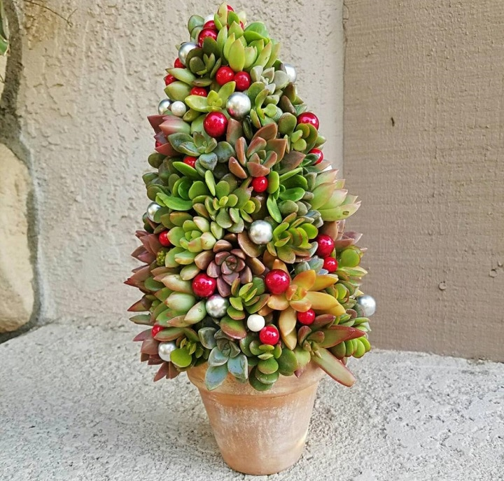 How Does a Succulent Christmas Tree Work