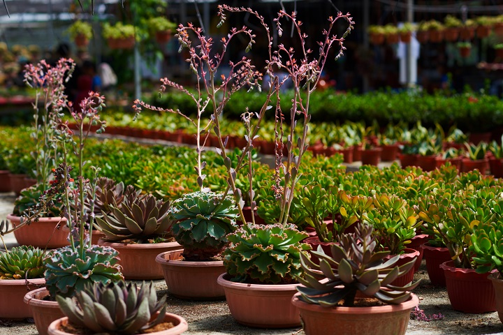 How to Choose the Best Succulents for Your Succulent Nursery