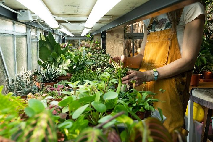 How to Make a Succulent Nursery