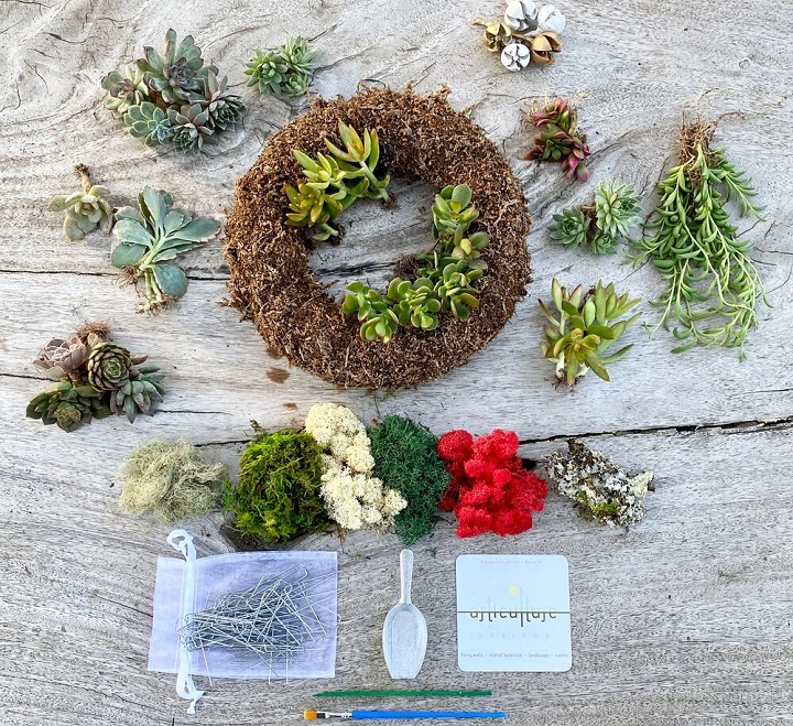 How to Make a Succulent Wreath Guide