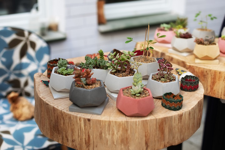 Pros and Cons of Mini Succulents