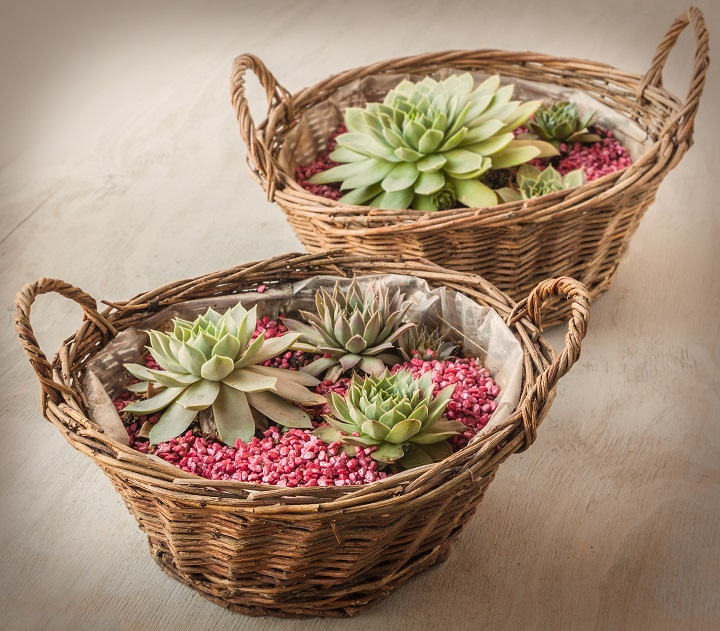 Reasons to Gift a Succulent
