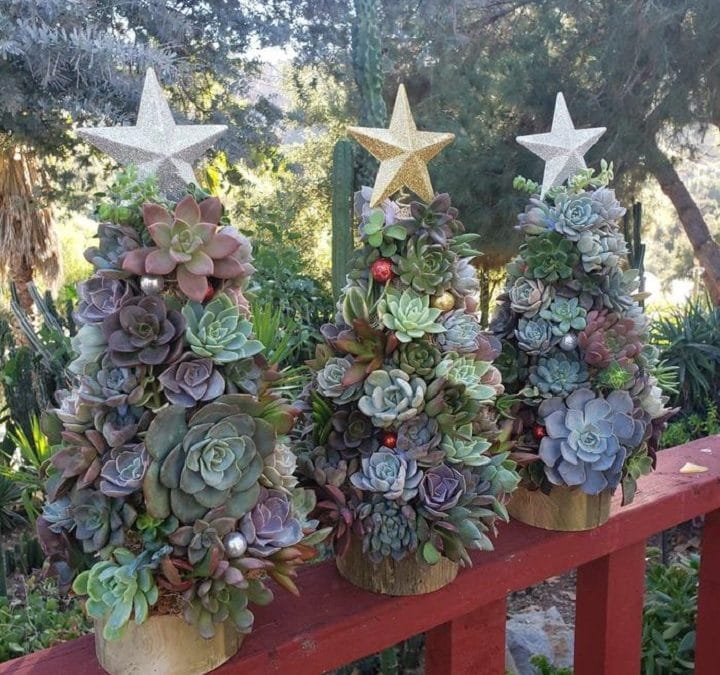 Succulent Christmas Tree With Full Guide on How to Make It