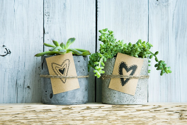 Succulent Gifts & Ideas For People Who Adore These Plants