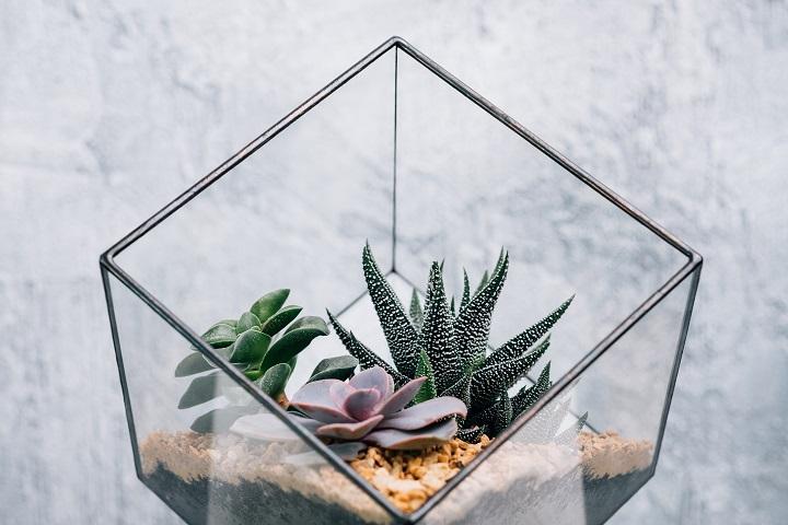 Succulent Pentagon Glass Terrarium