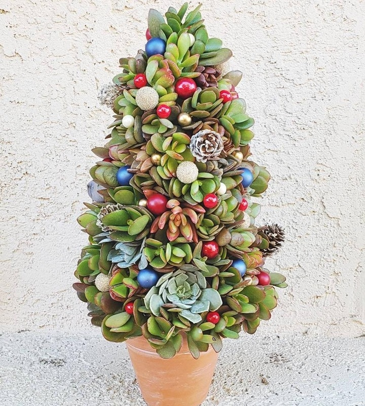 Things You Need to Make a Succulent Christmas Tree