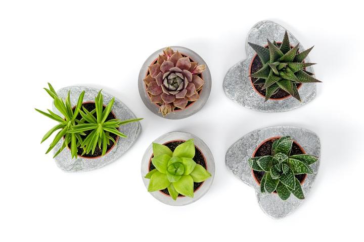 Types of Succulents You Should Grow (Indoor & Outdoor)